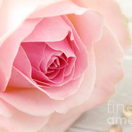 A rose by LHJB Photography