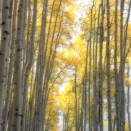 The Forests Edge Photography - Diane Sandoval - A Whisper of Light