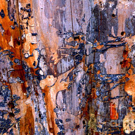 Anca Jugarean - Abstract by Nature