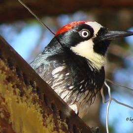 Linda Cox - Acorn Woodpecker