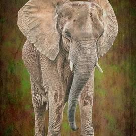 Rudy Umans - African Elephant