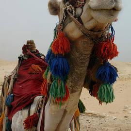 Camel Fashion by Bob Christopher