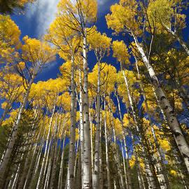 Saija  Lehtonen - An Arizona Autumn