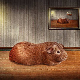 Mike Savad - Animal - The guinea pig