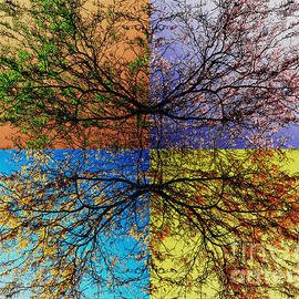 Jeff Breiman - Autumn Abstract
