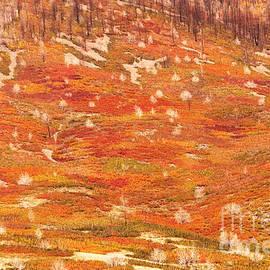 Bob and Nancy Kendrick - Autumn Carpet