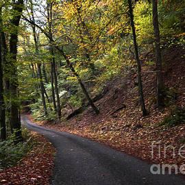 Bruno Santoro - Autumn Forest