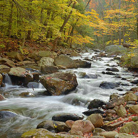 Stephen  Vecchiotti - Autumn In The Forest