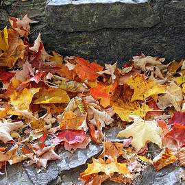 Autumn Leaves by Kay Novy