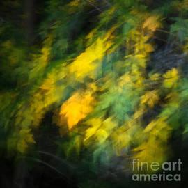 Alexander Kunz - Autumn Movement II.
