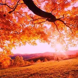 Anne-Elizabeth Whiteway - Autumnal Scene