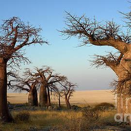 Baobabs Of Makgadikgadi by Mareko Marciniak