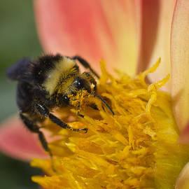 Priya Ghose - Bathing In Pollen
