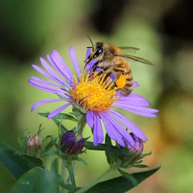 Doris Potter - Beautiful Bee