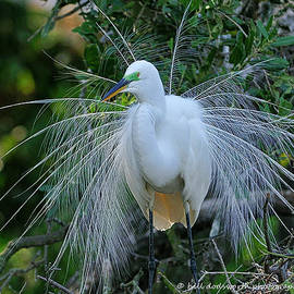 Beautiful Feathers by Bill Dodsworth