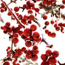 Sarah Burrin - Berry Christmas