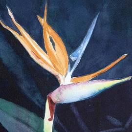 Charlotte Hickcox - Bird of Paradise