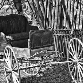 Black And White Buggy by Traci Cottingham