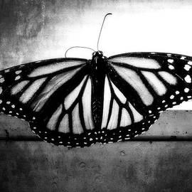 Julia Wilcox - Black Butterfly