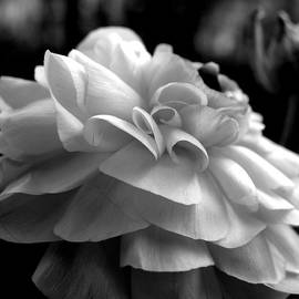Kim Galluzzo Wozniak - Black N White Beauty