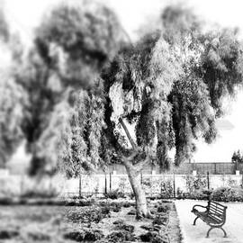 #blackandwhite #bnw #bw #trees #chair