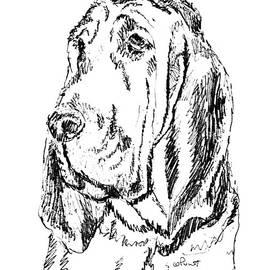 Bloodhound-art-portrait by Gordon Punt