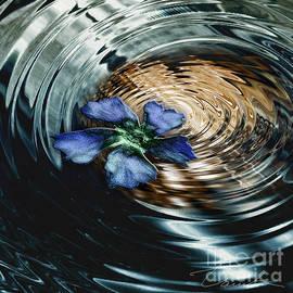 Danuta Bennett - Blue flower swirl
