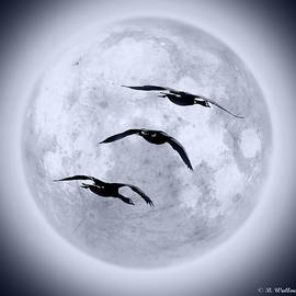 Brian Wallace - Blue Moon Geese
