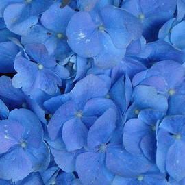 Val Oconnor - Blue on Blue