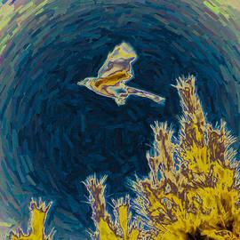 Bluejay Gone Wild by Trish Tritz