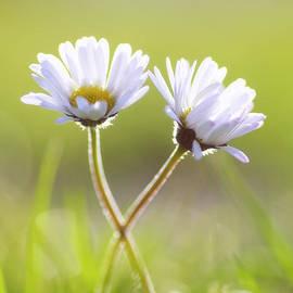 Tanja Riedel - Blumen Liebe
