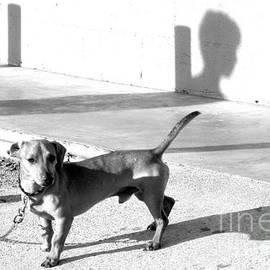 Boy Meets Dog by Joe Pratt