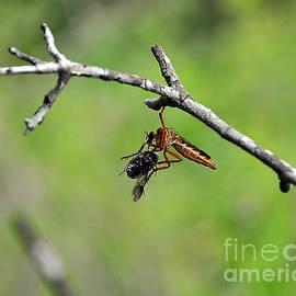 Al Powell Photography USA - Bug Eat Bug