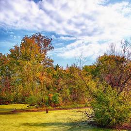Bill Tiepelman - Busch Wildlife Swampy Autumn - 2