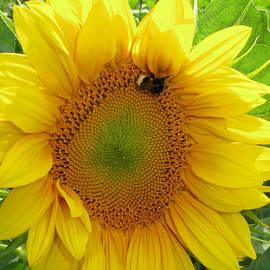 Debbie Cochener - Busy Bee
