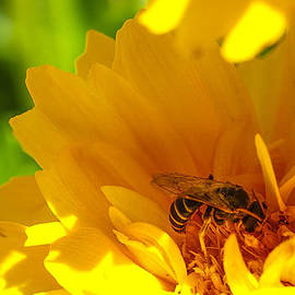 Busy Bee  by Scott McGuire