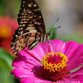 Butterfly 2 by Charuhas Images