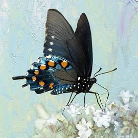 Betty LaRue - Butterfly Candy