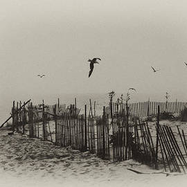 Cape May Morning by Bill Cannon