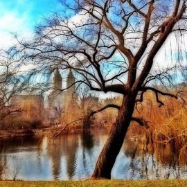 #centralpark #park #outdoor #nature #ny