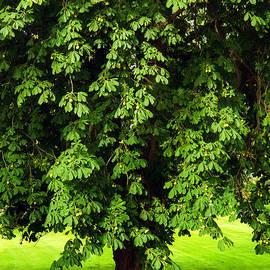 Lutz Baar - Chestnut tree