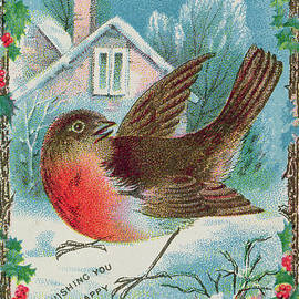 Christmas card depicting a robin  by English School
