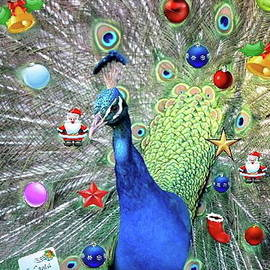 Christmas Peacock by Ronel Broderick