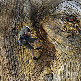 Bob Christopher - Climbing Elephant Rock