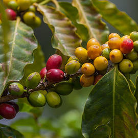 Colorful Coffee Beans by Craig Lapsley