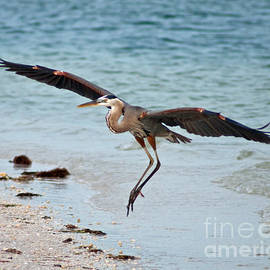 Coming in for a Landing  by Stephen Whalen