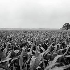 Jan W Faul - Corn Flakes on the Stem