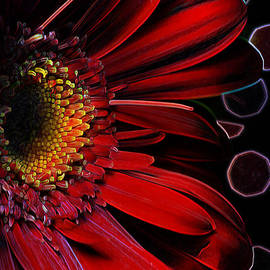 Bill Tiepelman - Crimson Gerber Refraction