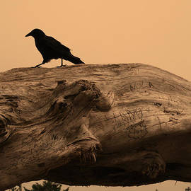 Crow Silhouette by Kym Backland