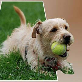 Thomas Woolworth - Cruz My Ball